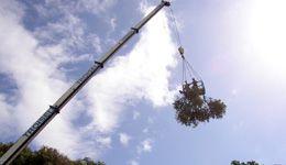 Les soins aux arbres
